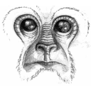 Noble Ape Simulation icon