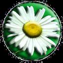 VChat icon