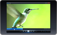 videoplayback.jpg