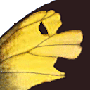 Zerene Stacker icon